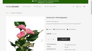 Plant an Indoor Garden